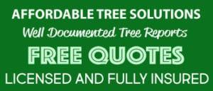 free quotes tree service briabane