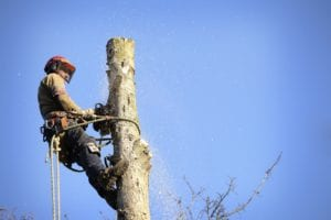 brisbane tree removal southside