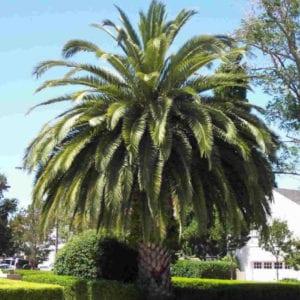 palm tree removal logan brisbane
