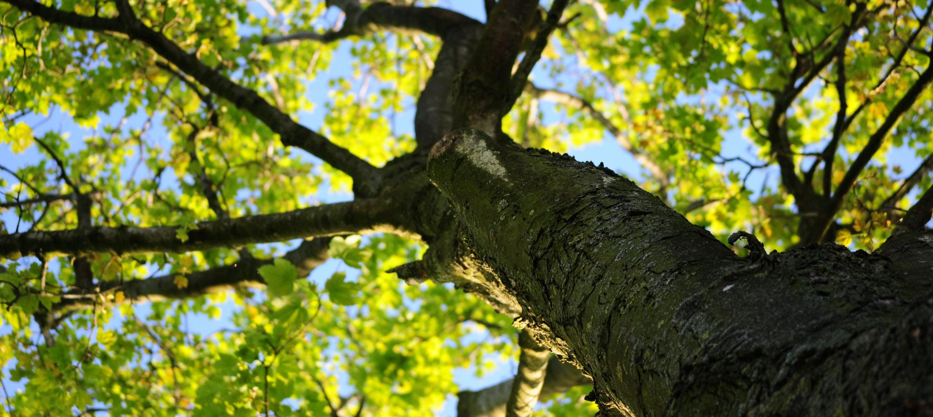 tree cutting brisbane west