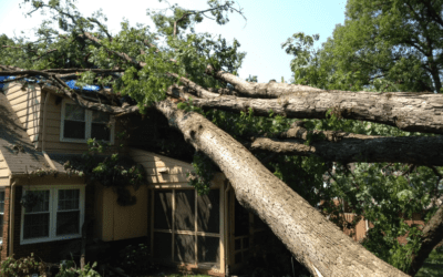 Is Your Tree A Hazard – Tell Tale Signs of Danger