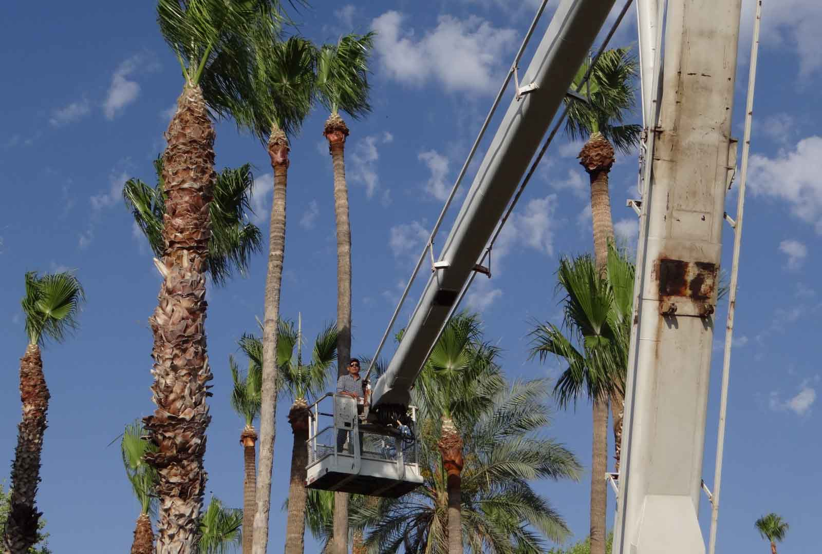 free palm tree removal brisbane
