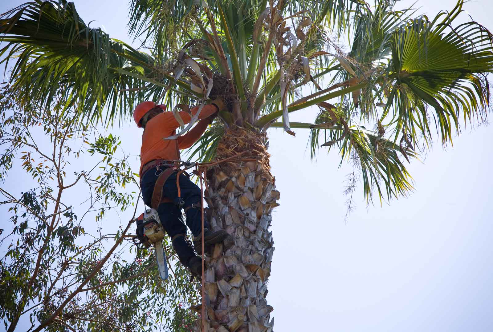 palm tree removal service logan