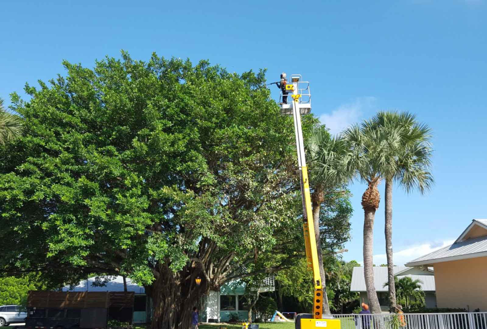 palm tree removal techniques