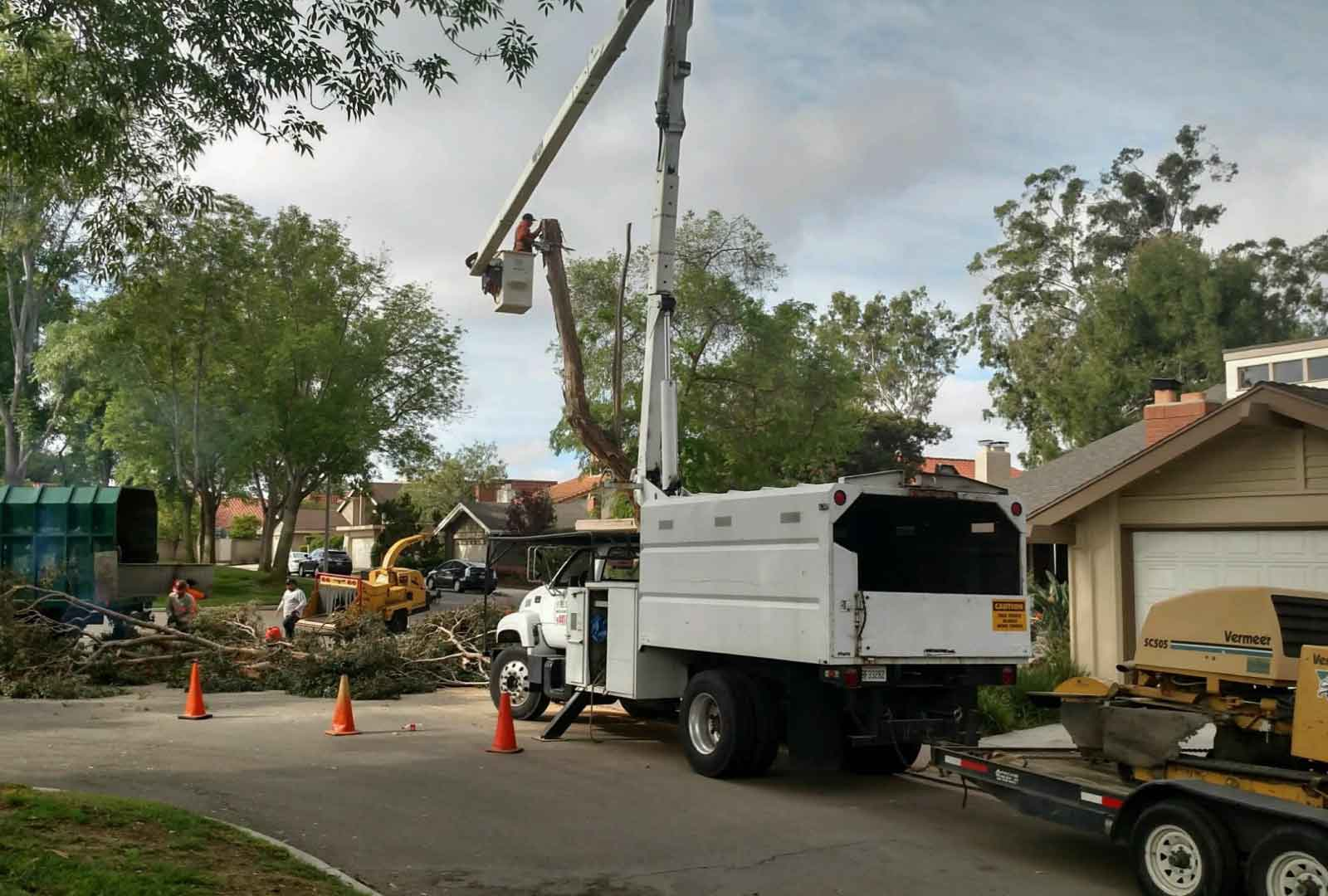 palm tree removal brisbane cost