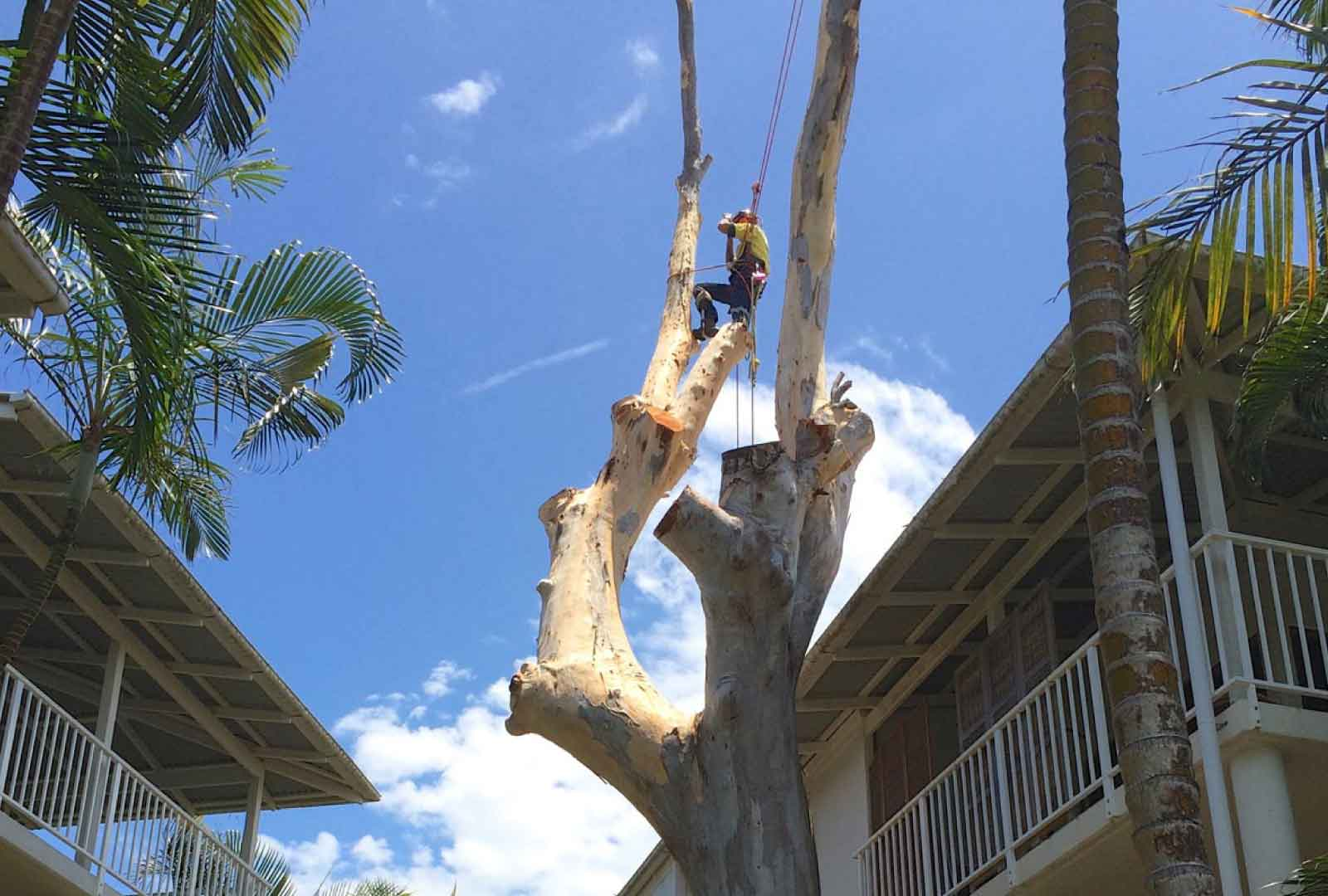 tree removal brisbane
