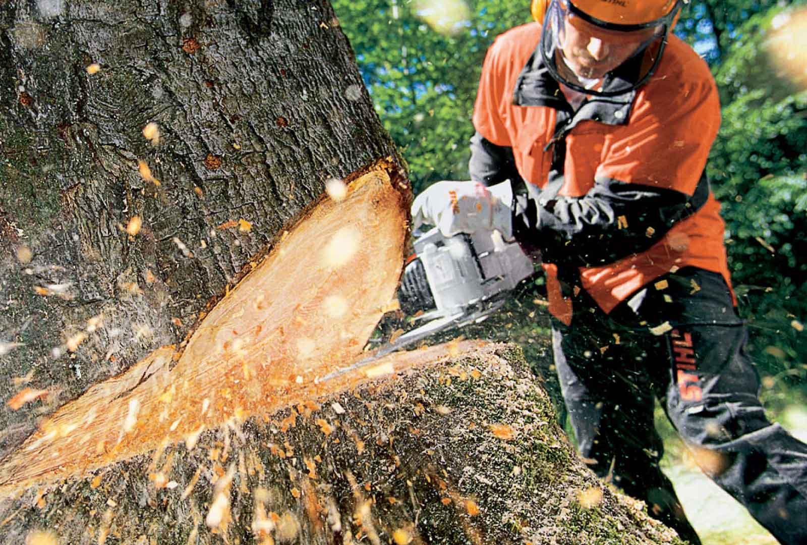 arborist brisbane west