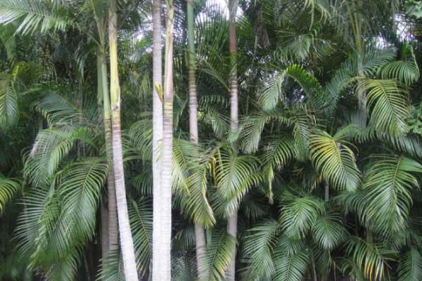 alxander palm removal brisbane