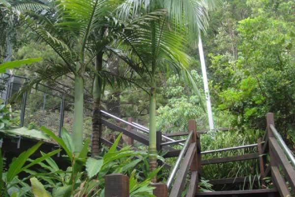 palm tree removal logan