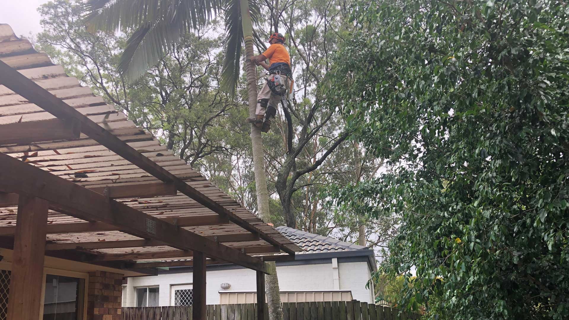 palm tree removal brisbane ipswich southside