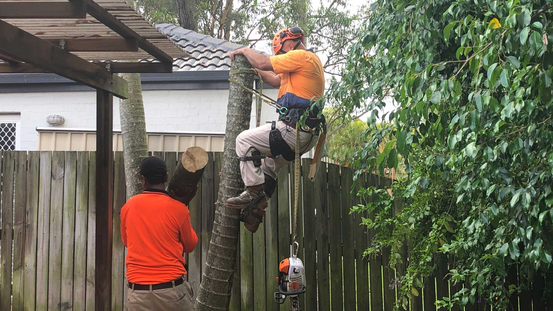palm tree removal brisbane ipswich southside 2
