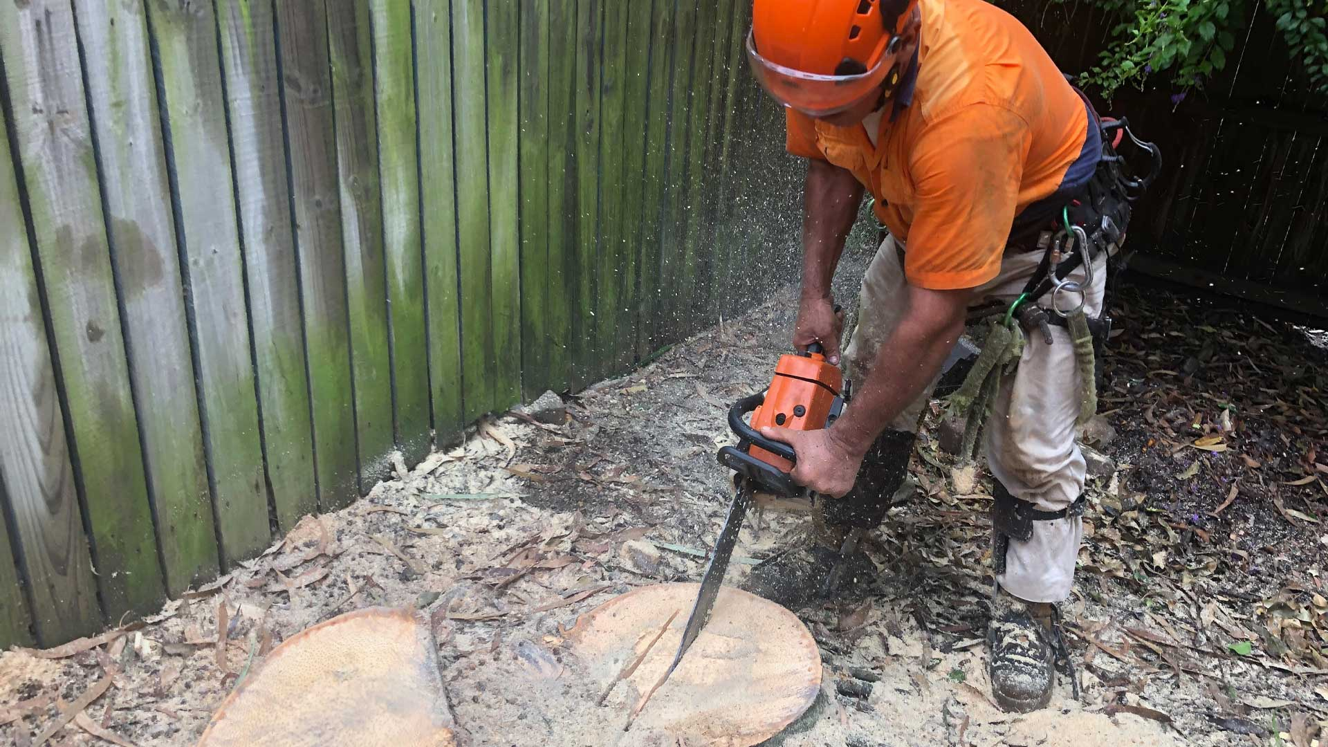 palm tree removal brisbane ipswich southside 8