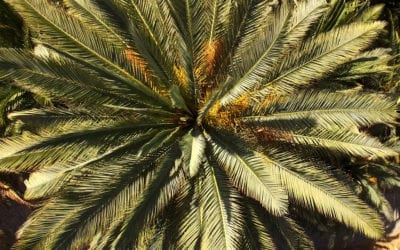 Why Are Palm Trees So Popular?