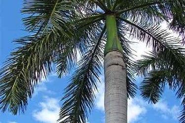 Royal Palm Brisbane QLD