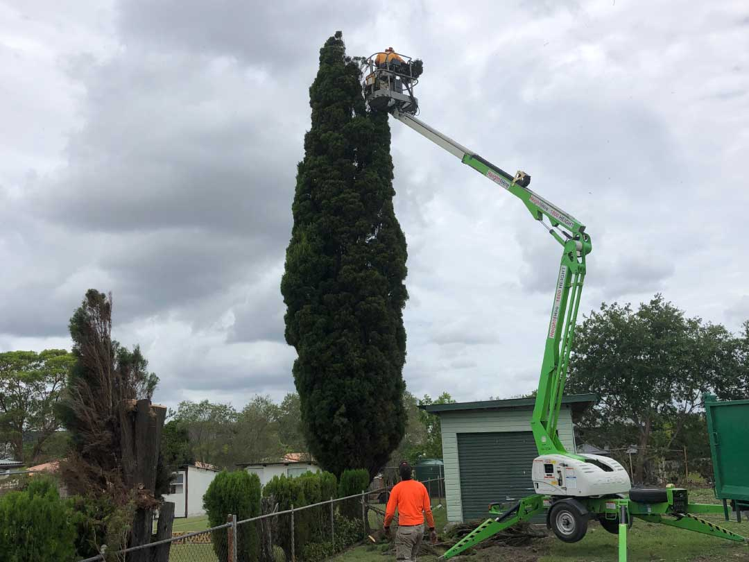 tree-lopping-services-brisbane-southside-1