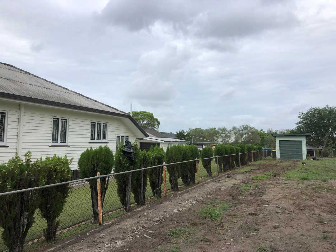 tree-lopping-services-brisbane-southside-3