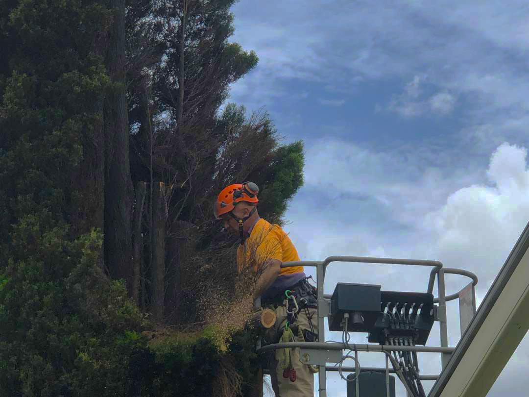 tree-lopping-services-brisbane-southside-12