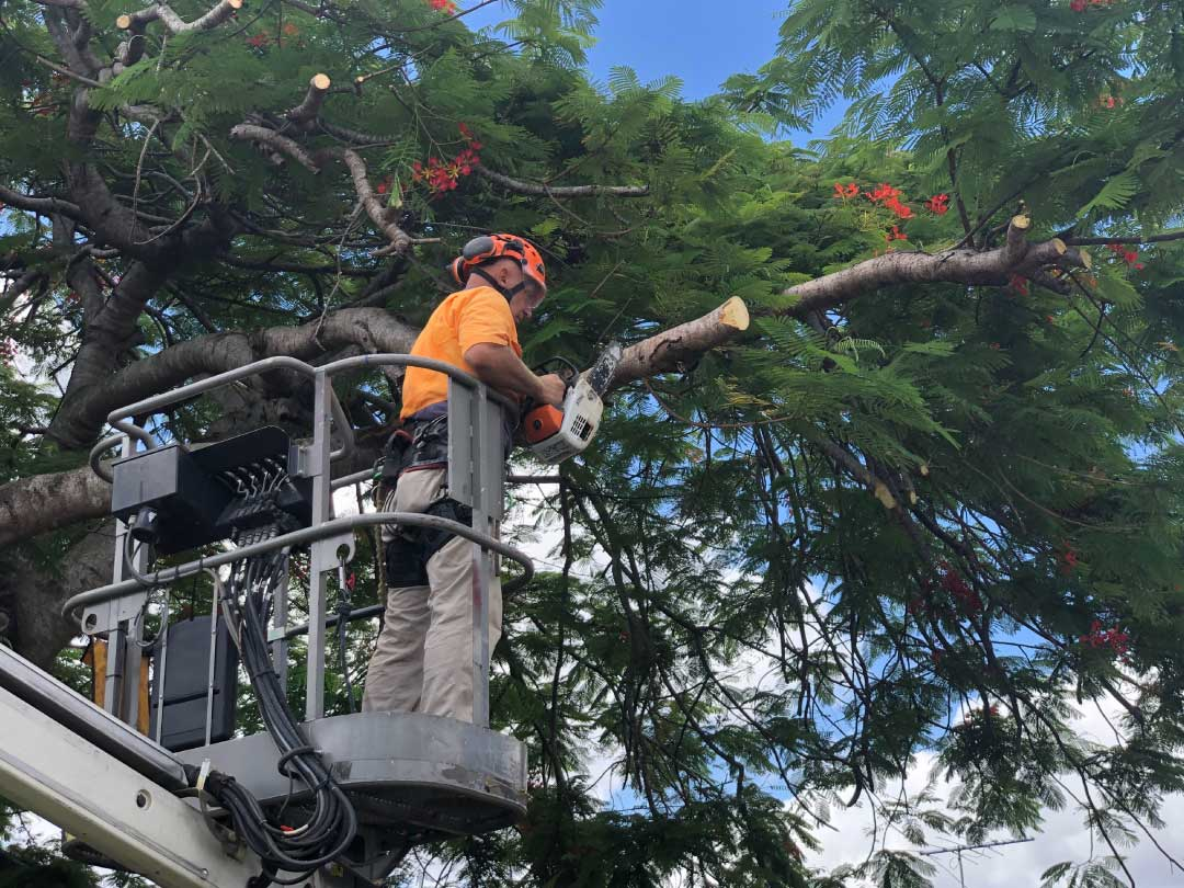 tree-lopping-services-brisbane-southside-7