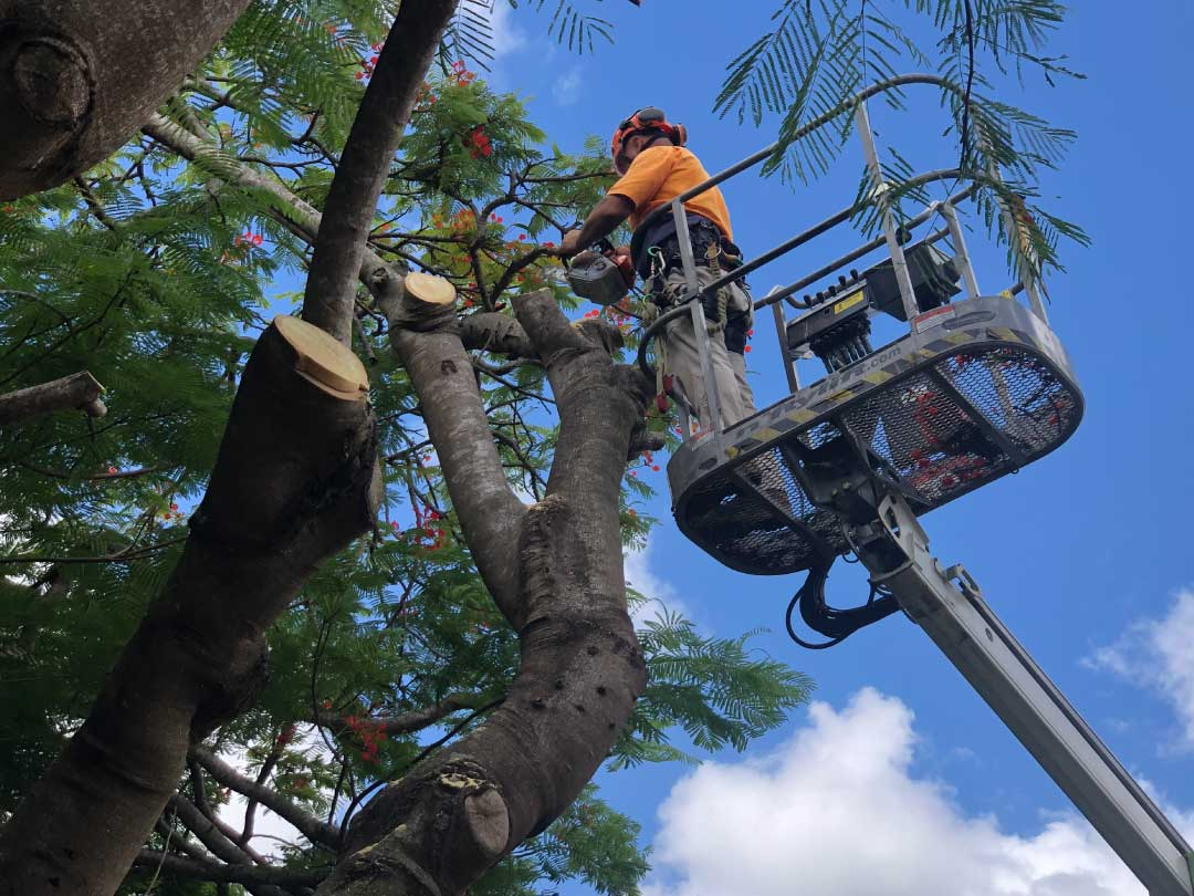 tree-lopping-services-brisbane-southside-5