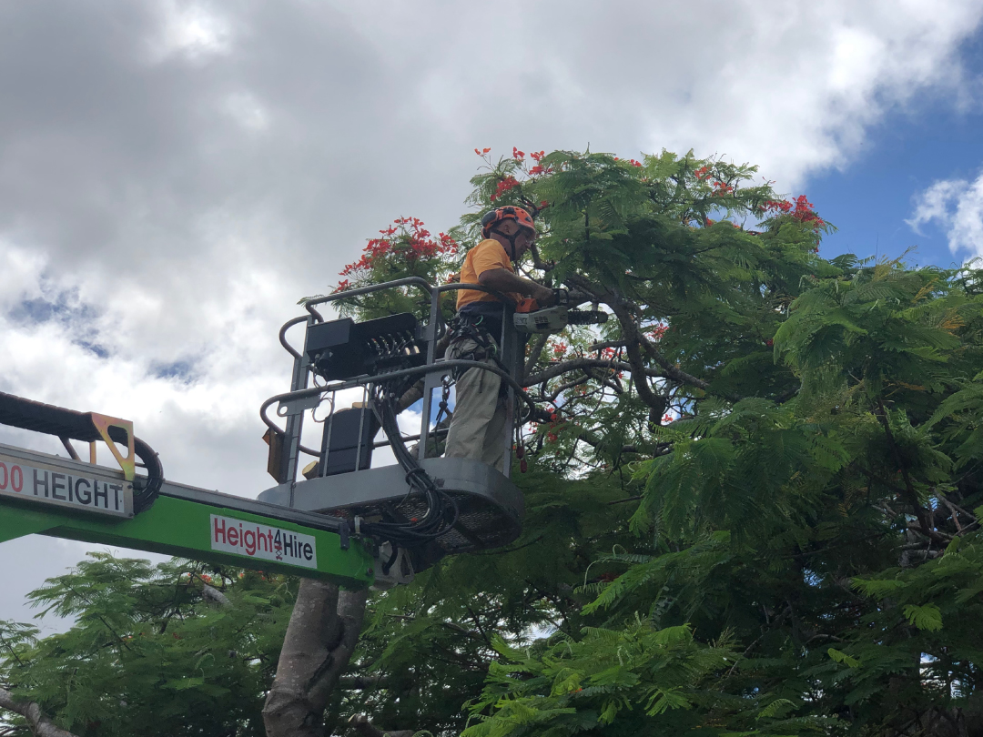 tree-lopping-services-brisbane-southside-0