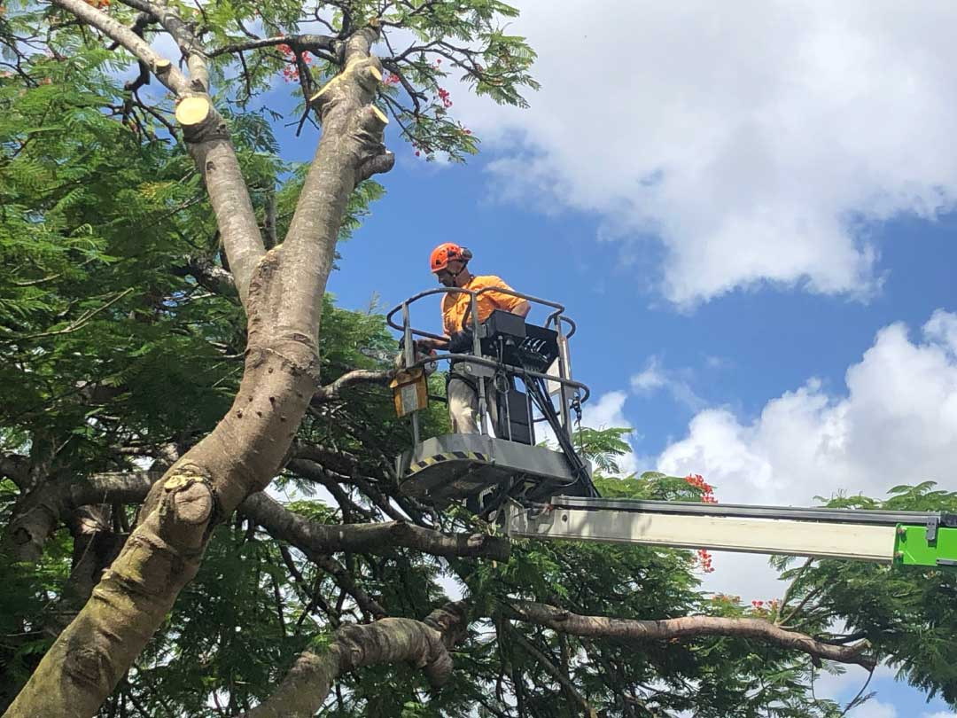 tree-lopping-services-brisbane-southside-8